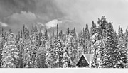 Winter Storm Framed Prints - Taking Refuge - Grand Teton Framed Print by Sandra Bronstein
