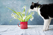 Kitty Cat Photo Prints - Taking Time to Smell the Flowers Print by Linda Lees