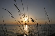 Ocean Inlet Posters - Tall Grass Sunset Poster by Bill Cannon