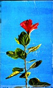 Cottage Prints - Tall Hibiscus - Flower Art By Sharon Cummings Print by Sharon Cummings