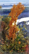 Tall Yellow Tree Print by Marty Koch