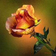 Orange Rosebud Posters - Tangerina Poster by RC deWinter