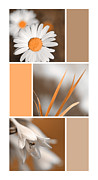 Tangerine Digital Art Prints - Tangerine Flowers Collage Print by Christina Rollo
