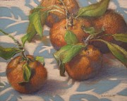 Tangerines Drawings Prints - Tangerines Print by Deborah Roskopf