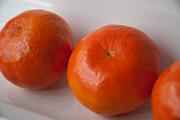 Tangerines3 Print by Lena Wilhite