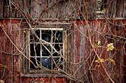 Rural Decay  Digital Art Metal Prints - Tangled Up In Time Metal Print by Lois Bryan
