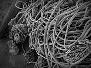 Tangles Of Seaweed 2 Bw Print by Chalet Roome-Rigdon