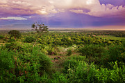 Outdoors Art - Tanzanian bush. African landscape. by Michal Bednarek