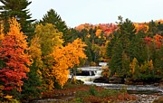 Yellow Leaves Tapestries - Textiles Posters - Taquamenon Falls Poster by Dipali S
