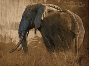 Tarangire Bull Print by Aaron Blaise