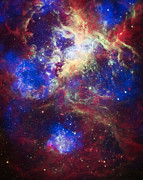 Constellations Posters - Tarantula Nebula 2 Poster by The  Vault - Jennifer Rondinelli Reilly