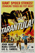 Tarantula Prints - Tarantula Print by Nomad Art And  Design