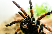 Green Monster Prints - Tarantula Print by Sotiris Filippou