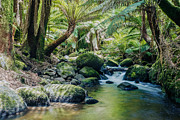 Fresh Green Prints - Tasmanian rainforest Print by Matteo Colombo