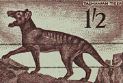 Tiger Print Framed Prints - Tasmanian Tiger Vintage Postage Stamp Framed Print by Andy Prendy