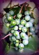 Purple Grapes Metal Prints - TASTE of NATURE Metal Print by Karen Wiles