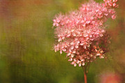 Bloosom Metal Prints - Taste of Summer Metal Print by Reflective Moments  Photography and Digital Art Images