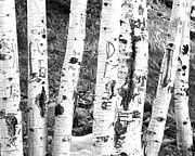 Birch Bark Tree Prints - Tattoo Trees Print by Rebecca Margraf