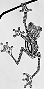 Jani Drawings Prints - Tattooed Tree Frog - Zentangle Print by Jani Freimann