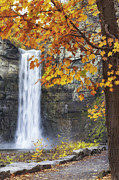 Wine Reflection Art Posters - Taughannock Falls And Maple Poster by Michele Steffey