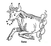 US Naval Observatory Library - Taurus Constellation Zodiac Sign 1482