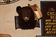 Chicago Bears Posters - Taxidermy Whimsical Bear In The Cellar Room At the Swiss Hotel Sonoma California 5D24454 Poster by Wingsdomain Art and Photography