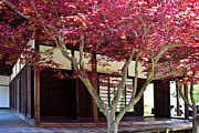 Symbolize Art - Tea House Thru the Maple by Gallery Three