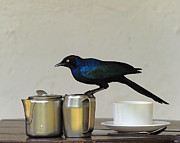 Starling Metal Prints - Tea Time in Kenya Metal Print by Tony Beck