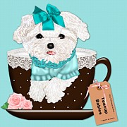 Polk-a-dots Posters - Teacup Baby Maltese Poster by Margaret Newcomb