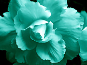 Begonias Posters - Teal Green Begonia Floral Poster by Jennie Marie Schell