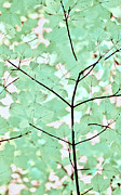 Teal Greens Leaves Melody Print by Jennie Marie Schell