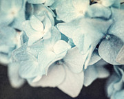 Cottage Chic Photos - Teal Hydrangea by Lisa Russo