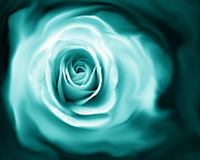 Monochromatic Posters - Teal Rose Flower Abstract Poster by Jennie Marie Schell
