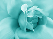 Monochromes Art - Teal Rose Flower by Jennie Marie Schell
