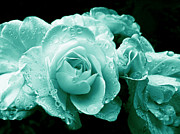 Rain Drop Posters - Teal Roses with Raindrops  Poster by Jennie Marie Schell