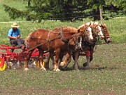 Amish Farms Photos - Team Work by Lori Frisch