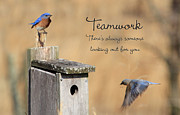 Sharon Batdorf - Team Work