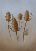 Weed Metal Prints - Teasel Metal Print by Angie Vogel