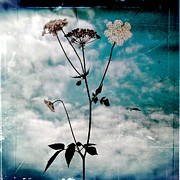 Lace Digital Art - Teasel Family by Gothicolors And Crows