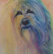 Maltese Dog Posters - Teddy Bear Poster by Linda Kriegel