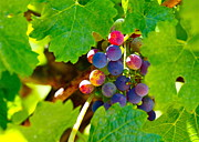 Blue Grapes Photos - Teenagers by Michael Blesius