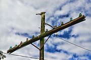 Telephone Wires Framed Prints - Telegraph Pole - Yesterdays Technology Framed Print by Paul Ward