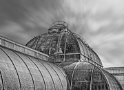 Chris Thaxter - Temperate house Kew...