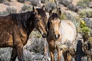 Wild Horse Prints - Tender Moment  Print by James Marvin Phelps