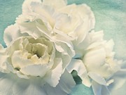 White Flower Photos - Tenderly by Priska Wettstein