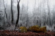 Michael Eingle - Tennessee Mountain Frost