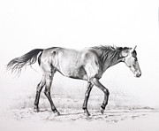 Tennessee Drawings - Tennessee Walking Horse by Karen Broemmelsick