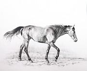 Tennessee Walking Horse Print by Karen Broemmelsick