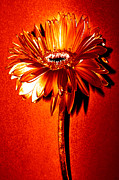 Digitally Altered Floral Posters - Tequila Sunrise Zinnia Poster by S Allen