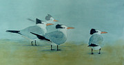 Sarah Buell  Dowling - Terns In The Mist